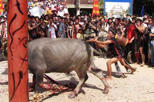 Xã nghèo miền núi thu mỗi hộ 300 ngàn để tổ chức lễ hội chọi trâu