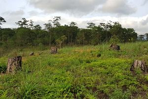 Rừng bị phá trụi hơn 1 năm cơ quan chức năng mới phát hiện