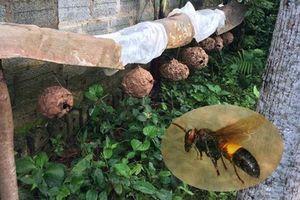 Ngoài ong vò vẽ, những động vật này giết người như sát thủ