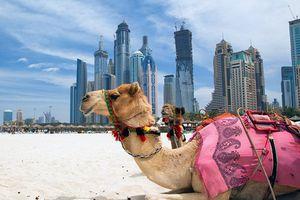 Nín thở trước vẻ đẹp quê hương đội bóng U23 UAE