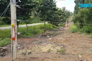 Đồng Nai sợ hàng rào điện 'bất lực' vì voi rừng quá thông minh