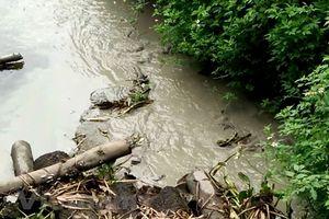 Cà Mau: 'Đầu độc' môi trường, 4 doanh nghiệp bị xử phạt