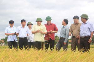 Quảng Trị: Đẩy nhanh tiến độ thu hoạch lúa vụ Hè Thu