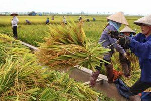 Sáp nhập Thủ đô: Bước đệm cho nông nghiệp huyện Mê Linh phát triển