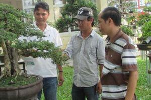 Đà Nẵng: Nhiều cây cảnh, bonsai 'độc, lạ' tại sân chơi của ND