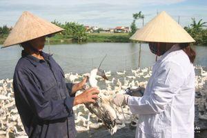Tăng cường kiểm soát dịch cúm gia cầm H5N6 tại Quỳnh Lưu