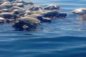 Bí ẩn hàng trăm rùa biển Golfinas chết trôi