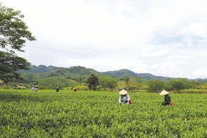 Từ làng thanh niên lập nghiệp làm kinh tế đến làng nông thôn mới ở nơi thâm sơn cùng cốc