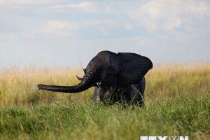 90 con voi bị giết chỉ trong vài tuần ở công viên quốc gia Botswana