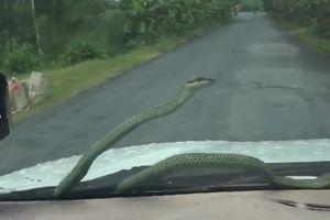 Giật mình với chú rắn 'tự nhiên' xuất hiện trên cửa kính trước ô tô khiến tài xế hoảng hồn