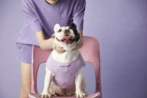 Ngành dịch vụ cho chó nhà giàu bùng nổ ở châu Á