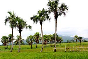 Hành trình đi tìm huyền thoại 'kỵ sĩ' hộ làng ở xứ Thanh