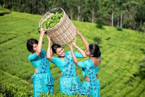 Đến Sri Lanka, tận hưởng loạt trải nghiệm cuốn hút không muốn về