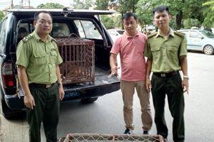 Hai cá thể khỉ quý, hiếm được giải cứu về trung tâm cứu hộ
