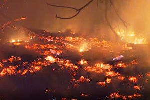 Quảng Bình: Gần 100 ha rừng bị thiêu rụi bởi đám cháy từ nghĩa trang