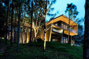Mê mẩn ngắm căn nhà cổ tích đầy yên bình giữa rừng thông ở Vĩnh Phúc