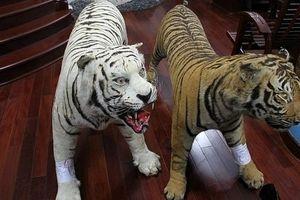 Lưu giữ 2 bộ da hổ quý hiếm nhồi bông, gia chủ bị bắt giam