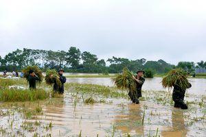 Lực lượng nòng cốt phòng, chống thiên tai