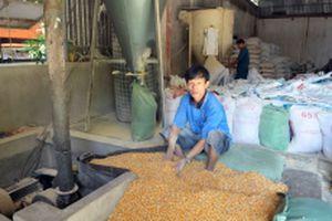 Cần sớm bình ổn thị trường thức ăn chăn nuôi