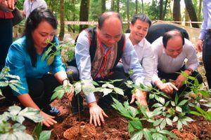 Thủ tướng Nguyễn Xuân Phúc: Xử lý nghiêm tình trạng buôn bán sâm Ngọc Linh giả