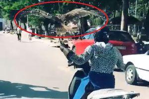'Ninja LEAD' một tay lái xe, một tay đỡ chim đại bàng