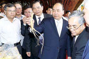 Thủ tướng Nguyễn Xuân Phúc: Đưa 'quốc bảo' sâm Ngọc Linh thành quốc kế dân sinh
