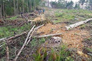 Điều tra, xử lý vụ phá 3,98ha rừng phòng hộ Phi Liêng