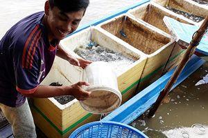 Cá, tôm ồ ạt đổ về mùa nước lũ giúp dân miền Tây thu nhập 'khủng'