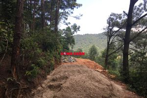 Bài 1: 'Tan hoang' hàng chục héc ta rừng phòng hộ Lâm trường Sóc Sơn!