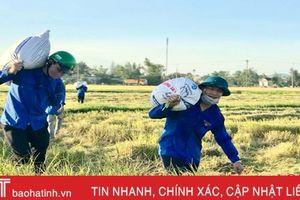 Đoàn viên thanh niên giúp dân thu hoạch lúa hè thu