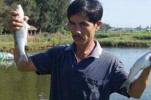 Cho cá đối ở chung với tôm, sau 5 tháng lời tới hơn 77 triệu