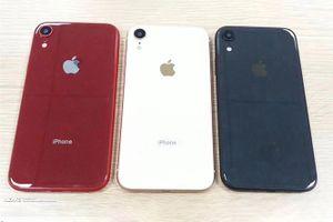 Biến thể giá rẻ iPhone 9 6,1 inch rò rỉ với ba màu sắc rực rỡ