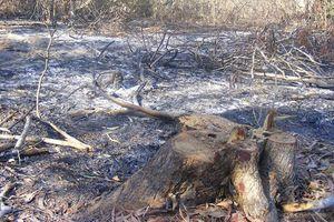 Bình Thuận: Xử lý nghiêm đối tượng ngang nhiên chặt phá rừng và chiếm đất rừng trồng