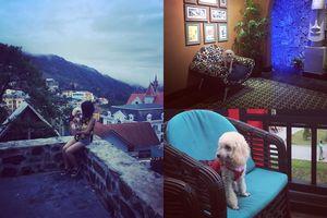 Ngưỡng mộ chú cún đáng yêu được theo chân cô chủ xinh đẹp đi du lịch