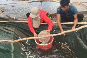 Ngư dân miền Tây kiếm nửa triệu/ngày nhờ cá, tôm mùa lũ