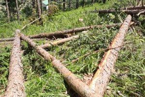 Tỉnh Lâm Đồng chỉ đạo làm rõ vụ phá rừng Báo CAND đã phản ánh