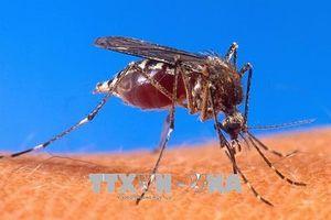Bùng phát dịch Virus Tây sông Nile tại Hy Lạp