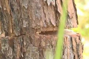 Cận cảnh những cánh rừng bị tàn phá