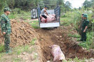 Dịch tả lợn Châu Phi nguy cơ xâm nhập vào Việt Nam có lây sang người?
