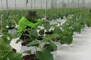 Long An 10 năm thực hiện tam nông: Xây dựng nông thôn hiện đại