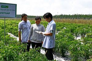 UNIBEN hỗ trợ nông dân thực hiện VietGAP, hướng tới phát triển vùng nguyên liệu sạch