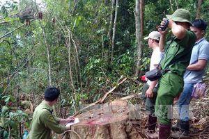 Lâm Đồng khẩn trương điều tra, xử lý các vụ phá rừng, chống người thi hành công vụ