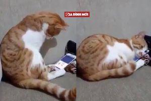 Phản ứng của chú mèo khi nhìn thấy hình ảnh người chủ quá cố khiến bạn rơi nước mắt