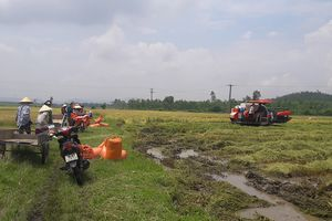 'Cò' bảo kê máy gặt lúa thuê làm khó nông dân Hà Tĩnh