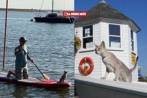 Cô mèo đặc biệt có sở thích bơi thuyền cùng ông chủ 72 tuổi
