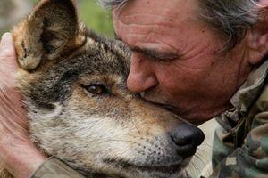 Sự thật về người đàn ông được đàn chó sói nuôi suốt 15 năm ở Tây Ban Nha