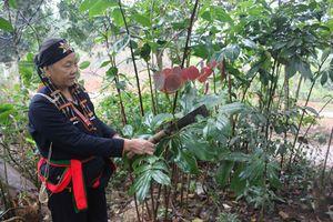 Danh Y núi Tản - Ba Vì: Triệu Thị Thanh
