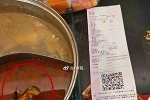 Thai phụ ăn lẩu có xác chuột chết, nhà hàng gây sốc khi đòi cho tiền phá thai nếu ảnh hưởng đến em bé