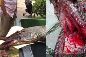 Clip: Thủy quái mình rắn đầu cá sấu cắn bé gái 9 tuổi ở Trung Quốc