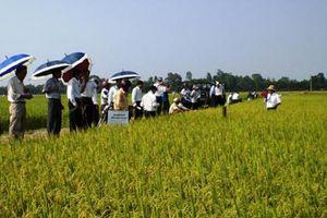TT khuyến nông Quảng Nam: Làm tốt vai trò hỗ trợ DN nông nghiệp